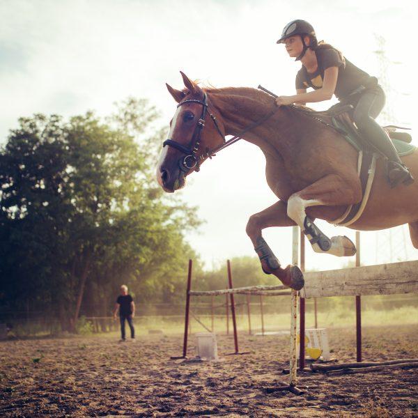 calcium pour chevaux